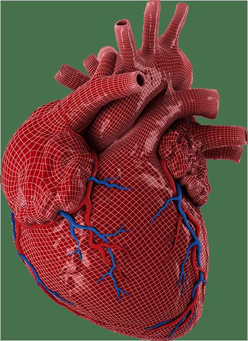 hearth model